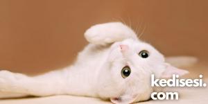 Kediler Neden Karınlarına Dokununca Kızar?