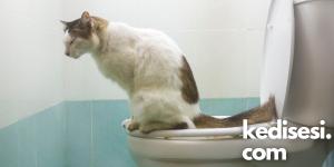 Kediler Tuvaletini Kaç Saat Tutabilir?