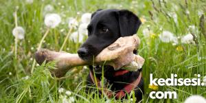 Köpeklere Hangi Kemik Türleri Verilebilir?