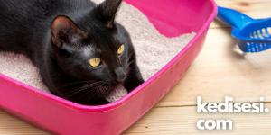 Kedilerin Kumda Yatmasını Önlemek İçin Ne Yapabiliriz?