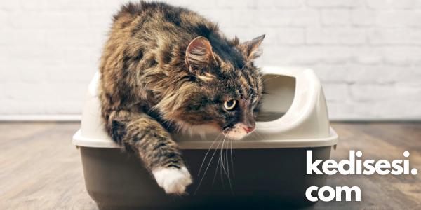 Kedim Neden Kumunda Yatıyor?