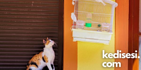 Kediler Kuşları Neden Kovalar?