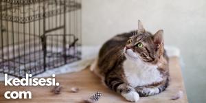 Kediler Kuşlarla Anlaşabilir mi?