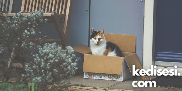 Kediler Kutu İçinde Oturmayı Neden Sever?