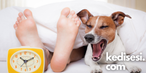 Köpeklerle Yatmanın Bir Zararı Var mı?