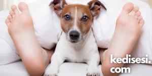 Köpeklerin Ayak Ucunda Yatmasının Sebepleri