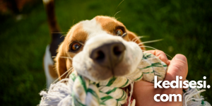 Evde Köpeklerimiz İçin Yapabileceğimiz Oyuncak Çeşitleri