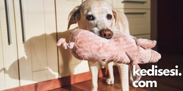 Evde Köpeklerimiz İçin Oyuncak Yapabilir miyiz?