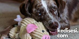 Evde Köpeklerimiz İçin Yapabileceğimiz Oyuncaklar