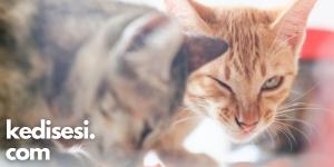 Kedilere Nasıl Hap İçirilir?