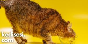Kedilere İlaç İçirmenin Yolları