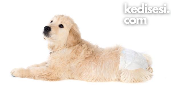 Köpek Tuvalet Pedi Nedir? Ne İşe Yarar?