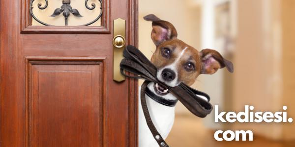Köpek Tasmaları Hakkında Bilmeniz Gerekenler