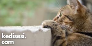 Kediler neden çok meraklıdır?