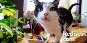 Kedilerin Merakını Engelleyebilir miyiz?