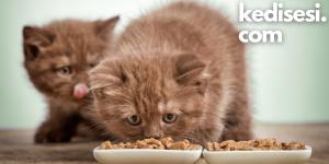 Yavru Kedilere Ne Sıklıkta Mama Vermeliyiz?