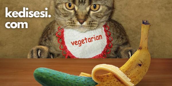 Kediler Salatalıktan Neden Korkar?
